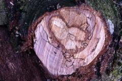 Herz im Baum #3