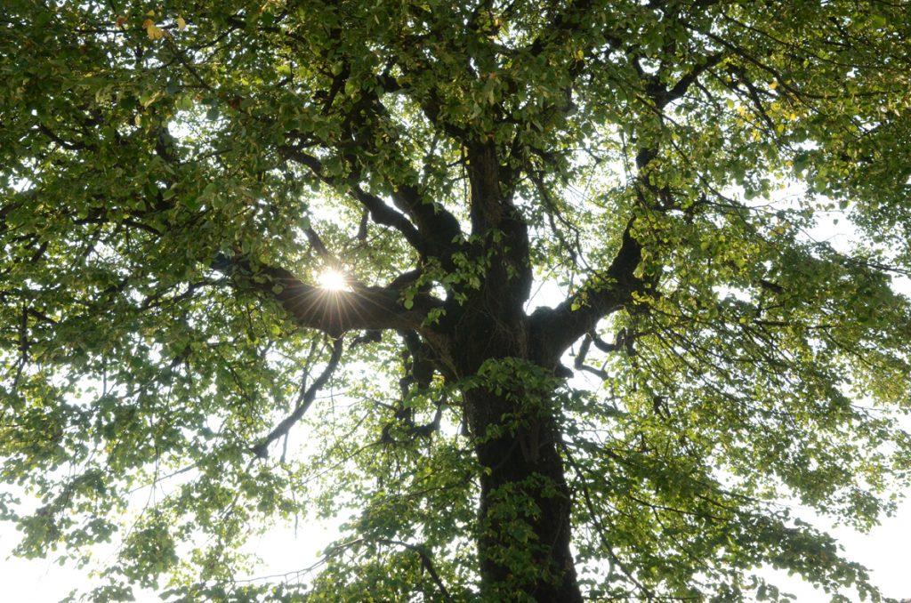 Waldreichtum - der Wald fördert unsere Gesundheit.